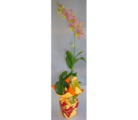 Dendrobium-11