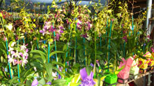 """Orchids Direct"" Assortment"