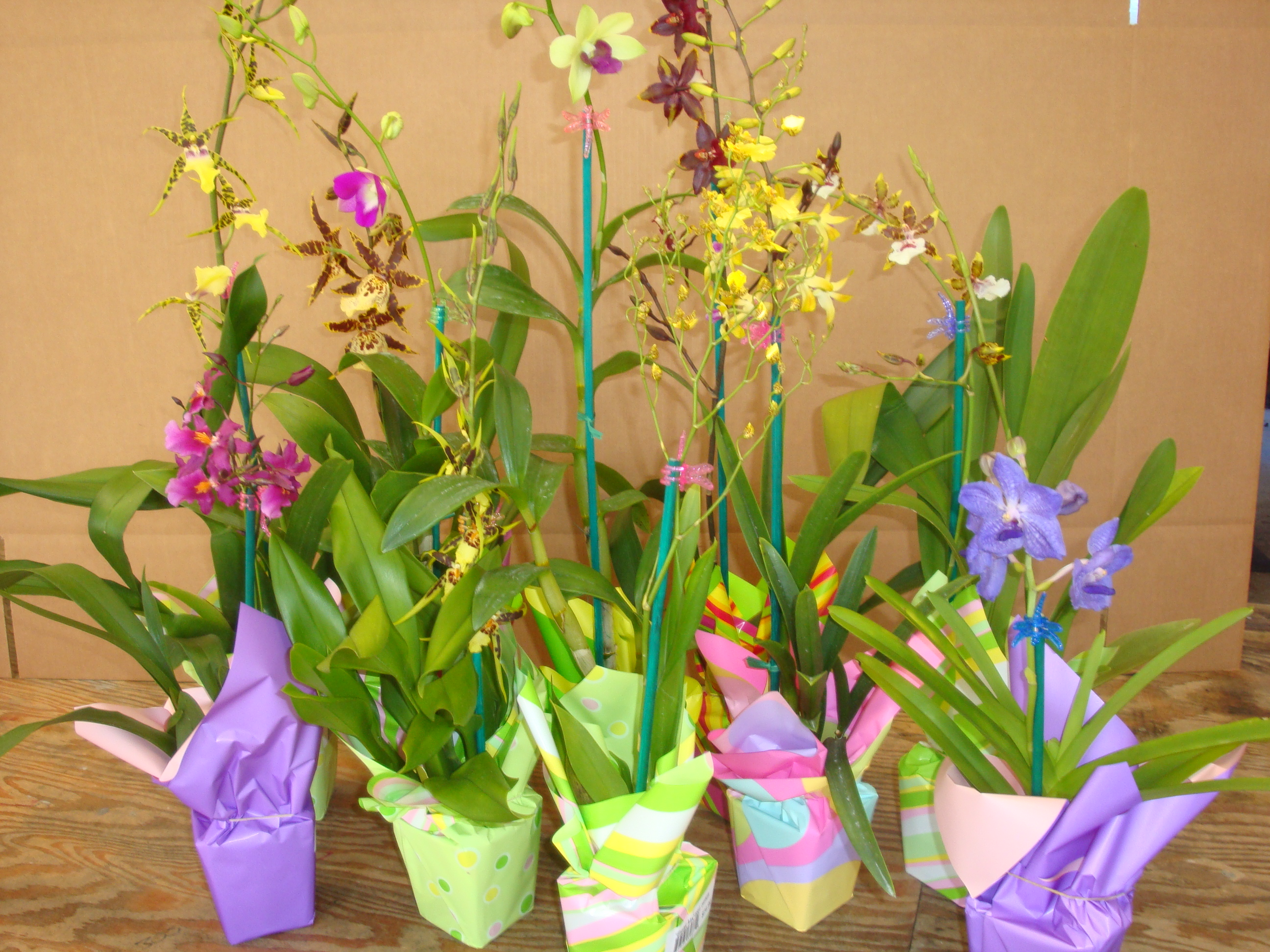 spring orchids10